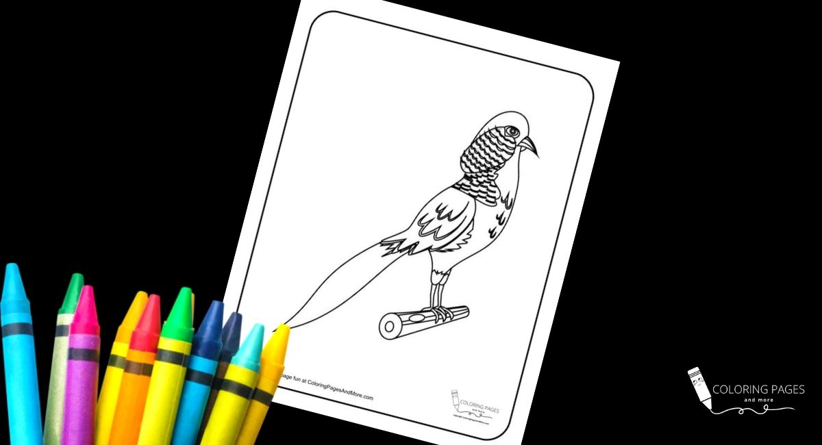 Parakeet Bird Coloring Page